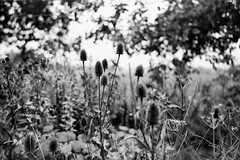(salparadise666) Tags: moskva 2 industar 23 110mm ilford fp4 caffenol rs nils volkmer monochrome bw black white landscape hannover calenberger land region niedersachsen germany rural