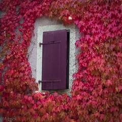 vignes rouges (le Stand'Arts) Tags: blonay vignes rouge