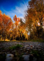 Rough Roads Lead to Beautiful Endings (Matt Barlow Photography) Tags: road gravel dirt sunset leafs hard blue orange yellow green