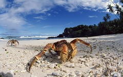 01013719 (Leo's Wallpapers) Tags: beaches dramatic landscapes claws horizontal outstanding christmas jfr coasts