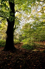 Into the woods... (smcnally24601) Tags: box hill national trust autumn fall surrey hills mist morning sunrise england britain