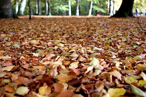 Autumn in Helsingborg 1