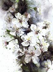 """Sakura : aux âmes Japonaises..."" (éliettek) Tags: sakura cerisier provence japon"