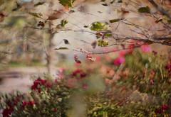 Monday Mornings in October (Angie Lambert) Tags: njinoctober octoberinnewjersey angielambert bokeh bokehilicious autumn fall october morninglight naturallight golden autumnday