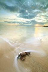 Its 'nippy' outside (Stu Patterson) Tags: stu patterson seascape sunrise beach crab whitley bay
