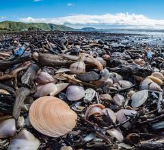 Washed up (leah-nz) Tags: paekakariki sea beach driftwood shells seashells shellfish seashore sand water