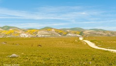 Hills and pasture (Photosuze) Tags: landscape spring carrizoplain road dirtroads sky clouds hills pasture flowers desolate fields fence