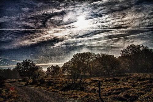 #montesantiago #burgos #naturaleza #setas #fotografia #photography #bucólico #arboles #hayas #bosque