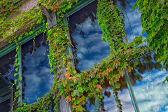 Where the sky begins (FotoFloridian) Tags: sky clouds window ivy foilage architecture building sony a6000 alpha maine newengland autumn