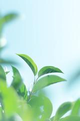 DSC09511 (zastaba_nosle) Tags: 葉 plant 写真撮ってる人と繋がりたい foliage a6000 写真好きな人と繋がりたい ソニー sony 植物 東京 日本 α6000 street japan tokyo î±6000 ã½ãã¼ åç好ããªäººã¨ç¹ãããã åçæ®ã£ã¦ã人ã¨ç¹ãããã æ¥æ¬ æ±äº¬ æ¤ç© è