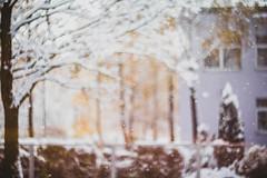 ✖'16 (mrscaramelle) Tags: bokeh helios helios402 helios40 гелиос гелиос402 гелиос40 советская оптика sovietlens soviet sovietlense bokehlicious canon canon60d 60d manualfocus nature mrscaramelle manualfocuslens manuallens manual macro november winter snow outdoor beautiful white snowdrops snowflakes