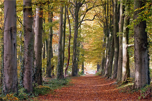 Forest path in autumn colors