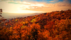 (m r z l t n) Tags: hungary pecs pcs landscape cityscape city sun sunhine sunset sunrise sunup autumn tilt shift tiltshift tree trees road roadway outdoor