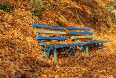 _F016010 (b.kunst17) Tags: nikon d3s herbst nikkor 70200 vrii farbe farben herbstfarben farn wald laub blatt bltter outdoor schrfentiefe