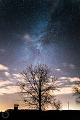 Last remains of the Milky Way (ristic.vedran42) Tags: nikon d3200 nikond3200 baranya baranja croatia milkyway astrophotography astroscape silhouette treesilhouette samyang16mm20 stars