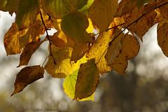 Pensive Autumn (Natali Antonovich) Tags: pensiveautumn autumn tervuren belgium nature