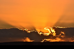 Saturday sunrise. (pstone646) Tags: sunrise sky nature clouds weather orange beauty kent elmley view landscape bird