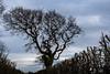 Bare Tree in Dusk Shroud (Simon Downham) Tags: tree trees autumn fall leaves bare brown max70114a