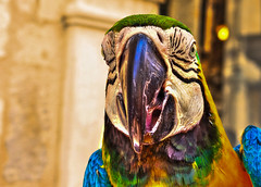Parrot - Papagei (TommyWHV) Tags: papagei parrot vogel bird hdr natur nature outdoor animal bunt vgel psittaciformes canon eos colors birds holiday wildlife wildlifeplanet tiere fotografie photographie explore