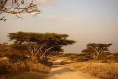 sabana con acacias (vitofonte) Tags: sabana savannah serengetinationalpark arbol tree acacia tanzania africa naturaleza nature natura natureza paisaje landscape vitofonte infinitexposure