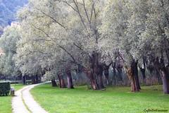 Non  primavera.... ma l'autunno (lefotodiannae) Tags: lefodiannae alberi autunno bergamo monasterolo del castello colori lombardia italia