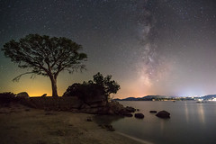 Lonely Tree (.remfer06) Tags: nuitetoilesvoielactee sony a7 samyang 12mm crop palombagia corsica corse night nuit sea shore mer sky ciel long exposure longue pose etoiles stars milky way voie lactee nightphoto nightfoto