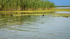 DSC02801-3 (martin_cristian) Tags: danube river delta