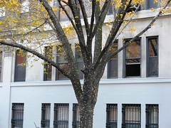 Tuesday Colours - Sunday in New York (Pushapoze (not my president)) Tags: newyorkcity xmas vitrines windows noel arbre lumieres lights uws upperwestside
