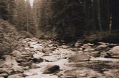 Lostine River 7, 2015 (Sara J. Lynch) Tags: trees white black lynch film water oregon forest 35mm river j blurry rocks sara eagle asahi pentax k1000 corridor cap flowing wilderness wallowas lostine