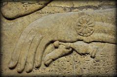 Hand of Ashurnasirpal on a sword's hilt (Assyria, Babylon, Akkad, Sumer...) Tags: bucket spirit iraq relief bracelet sword turban protective britishmuseum bas mesopotamia bowel alabaster sheath polos ashurnasirpal nimrud kalhu armlet apkallu royalthrone headdess calah banduddu
