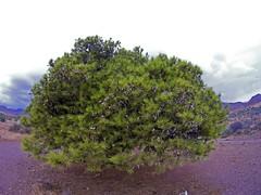 Superpionero (AAcero) Tags: cabodegata almeria genoveses sj5000