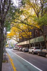 Brooklyn's First Color -- Autumn, 2015 (Diacritical) Tags: street autumn trees color colors leaves brooklyn 35mm f68 summiluxm11435asph centerweightedaverage leicamtyp240 secatf68 92807am october232015
