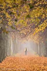 Misty people ... (Alex Verweij) Tags: autumn people woman dog forest walking wandelen herfst pad hond bos vrouw almere kleur walkingthedog wandelpad fongerspad