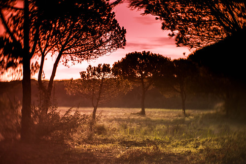 another petzval sunset