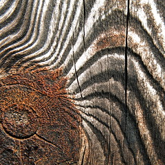 neither the tiger's eye nor the zebra's (vertblu) Tags: wood brown abstract macro eye texture wooden pattern post patterns knot textures makro weatheredwood hmm knothole stake macromode abstrakt redbrown macromondays weatheredandworn texturesquared