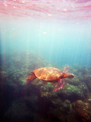 Kauai 2014 43