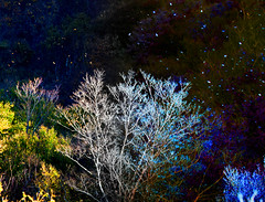Day fall night fall (ashokboghani) Tags: autumn fall leaves photoshop newengland newhampshire fallfoliage foliage