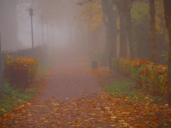 fall PB086505 (hlh 1960) Tags: november autumn trees mist fall misty colours nebel laub herbst blätter bäume farben
