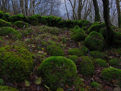 Green December (Mrs.Snowman) Tags: winter green norway moss westcoast mose stonefence sulesund