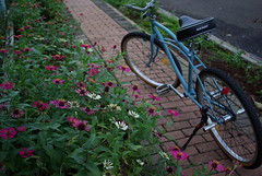 (Joseph Tarigan) Tags: flower bicycle garden pentax 28mm m cruiser f28 k10d