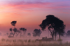 That's why I love winters (xeeart) Tags: winters wintermorning morning sunrise village trees tree colors nature clouds sky goldenlight fields landscape landscapephotography pakistan punjab lahore xeeshan canon canon6d fog mist