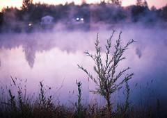 --2014-07-fed-arhstoyanie-000011 Sunset (tataata) Tags: 2014 july russia nikolalenivets summer trees landscape film analog fed3 35mm color light water