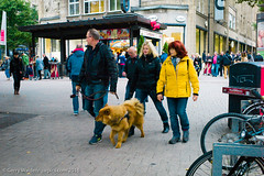 The Family Outing (gwpics) Tags: people germany streetphotography hamburg family clothes dog german person socialcomment socialdocumentary society straãenfotograpfie animal canine lifestyle streetpics