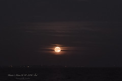 Hunters Moon 16-10-2016..low (Raymond K. Photography) Tags: fullmoon vollemaan supermoon themoon moon maan moonrise maansopkomst supermaan netherlands holland thenetherlands dutch markermeer sonya7s a7s sony sonyepz18105mmf4goss sony18105mm 18105mm