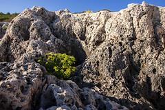 Premantura 03 (.Kikaytete.QNK) Tags: kikaytete erasmus croacia croatia istria premantura parquenatural acantilado