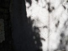 esgrafito (Ponto e virgula) Tags: mexico sanmigueldeallende