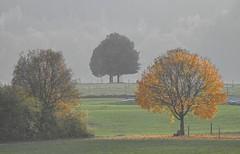 T(h)ree (Claude@Munich) Tags: germany bavaria upperbavaria egling neufahrn veiglberg autumn autumnal fall foggy tree three claudemunich bayern oberbayern baum nebl nebelig herbstlich herbst drei