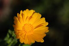 20160924_Cinq_Sens_Yvoire (7 sur 13) (calace74) Tags: fleurs macro jardinsdes5sens yvoire rhonealpes foretderipaille hautesavoie nature panorama thononlesbains