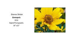 "Coreopsis • <a style=""font-size:0.8em;"" href=""https://www.flickr.com/photos/124378531@N04/30633483893/"" target=""_blank"">View on Flickr</a>"