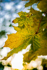 autumn colors (ppausb87) Tags: herbst autumn jahreszeit goldenautumn golden gold germany deutschland osnabrck natur nature liebe love passion leidenschaft bokeh nikon nikond5300 nikonflickraward